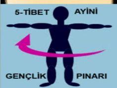 Bu Haraketleri Yapan Yaslanmıyor Dünyanın dört bir tarafında binlerce insan tarafından uygulanan mucizevi Tibet Ayinleri'ni oluşturan 5 hareketi aşağıda resimlerle göstermeden önce faydaların…