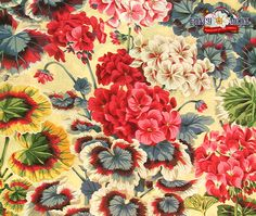 Gertrude Natural Cotton Fabric by Philip Jacobs
