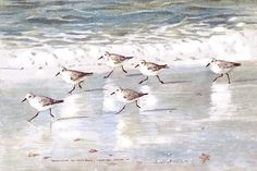 Sandpipers On Siesta Key Art Print by Shawn McLoughlin. All prints are professionally printed, packaged, and shipped within 3 - 4 business days. Choose from multiple sizes and hundreds of frame and mat options. Watercolor Bird, Watercolor Paintings, Ocean Paintings, Bird Paintings, Watercolor Animals, Watercolours, Siesta Key Beach, Shorebirds, Keys Art