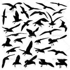 Birds — Vector EPS #flapping #migrate • Available here → https://graphicriver.net/item/birds/3078970?ref=pxcr
