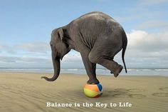 Sometimes it is hard to balance!