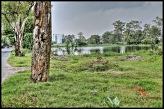 Lake and trees. (I tried HDR)