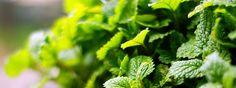 Tři recepty na tři zdravé bylinkové sirupy - Energie života