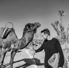 Aesthetic Art, Camel, Explore, Animals, Animales, Animaux, Camels, Animal, Animais