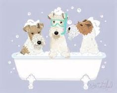 pam granderson wire fox terrier - - Yahoo Image Search Results