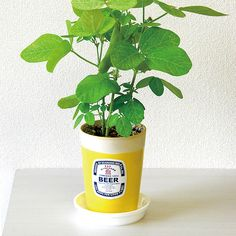 Grow your own edamame, a classic Japanese bar food, in a planter that looks like a glass of Japanese beer.