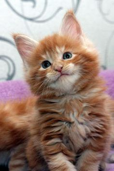 What a Lovely Smile! - Click to see lots of great cat pictures to brighten your day.