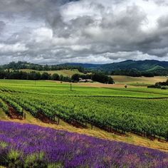 Willamette Valley, Oregon - our home town!