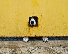saopaulo: Dog