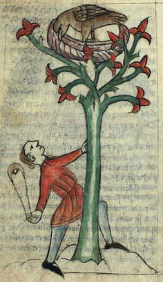 """A cinnamologus bird in a cinnamon tree, glaring at the man who is trying to knock its nest down to get the valuable cinnamon it contains. Pliny the Elder [1st century CE] (Natural History, Book 10, 50): """"There is a bird of Arabia called the cinnamolgus which makes its nest out of cinnamon twigs; the people of that country knock the birds down with lead-weighted arrows, and use them for trade."""" Kongelige Bibliotek, Gl. kgl. S. 1633 4º, Folio 38v"""