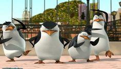 Madagascar penguins. Bonitos y gorditos muchachos.