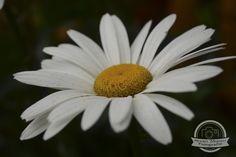 #Naturaleza #Flor #Fotografía #Photography