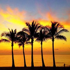 South Florida Best Beach In Florida, South Beach Miami, Florida Travel, Florida Beaches, South Florida, South Of France, France Vs, Fort Lauderdale Beach, Florida Living
