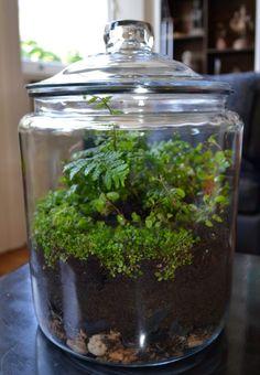 Mini Terrarium, Terrarium Design, Closed Terrarium Plants, Bottle Terrarium, Terrarium Centerpiece, How To Make Terrariums, Bottle Garden, Succulent Terrarium, Plants For Terrariums