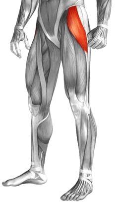 Leg Pain: 3 Steps to Eliminating Tensor Fasciae Latae Pain & Tightness. Thigh Muscle Anatomy, Hip Muscles Anatomy, Hip Anatomy, Human Anatomy Art, Anatomy For Artists, Anatomy Drawing, Thigh Muscles, Human Muscle Anatomy, Anatomy Organs