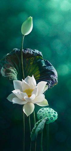 Lotus | Modren Villa