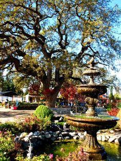 Alden Lane Nursery -Livermore CA