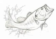 Drawing of a Largemouth Bass on Behance Fish Sketch, Pencil Sketch Drawing, Line Drawing, Animal Sketches, Animal Drawings, Art Sketches, Fish Drawings, Art Drawings, Bass Fishing Pictures