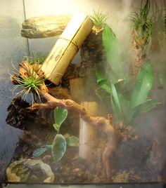 Vivarium designed for Day Geckos Bearded Dragon Cage, Bearded Dragon Habitat, Lizard Terrarium, Lizard Cage, 55 Gallon Aquarium, Chinese Water Dragon, Gecko Habitat, Deadly Plants, Household Plants