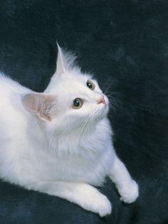 a Turkish Angora Cat Looking Up