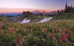 Photo Mazama Ridge Wildflower Sunset by Ray Green on 500px