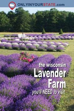 The Beautiful Lavender Farm Hiding In Plain Sight In Wisconsin That You Need To Visit Places to travel 2019 - Travel Photo Wisconsin State Parks, Wisconsin Vacation, Door County Wisconsin, Wisconsin Dells, Milwaukee Wisconsin, Vacation Trips, Day Trips, Vacation Ideas, Washington Island Wisconsin