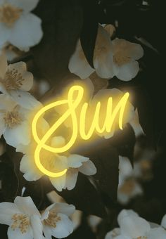 Sun floral digital typography Inspiration on TypeRiot
