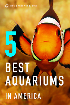 These aquariums are real-life Finding Nemo scenes! Here's your guide to the 5 Best Aquariums in the U.S.!