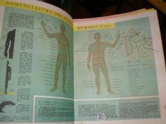 http://www.todocoleccion.net/enciclopedia-estudiantil-208-fasciculos-editorial-codex-anos-60~x8268732