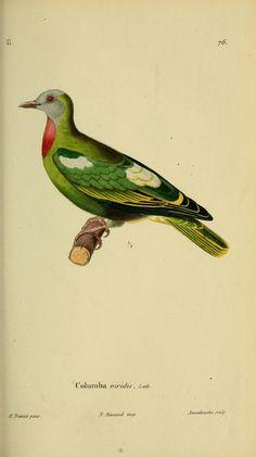 v.6 (1836) - Magasin de zoologie. - Biodiversity Heritage Library