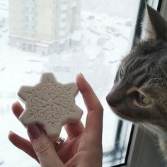 Snow outside and inside. Moscow end my cat.