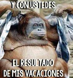 Imágenes y memes super graciosos con frases chistosas de monos, perros y gatos para morir de risa con amigos