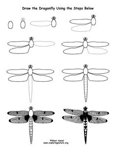 Dragonfly Drawing Lesson (Older Students) -- Exploring Nature ...