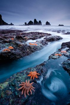 Really neat looking scene and quite different starfish than the ones you usually see...