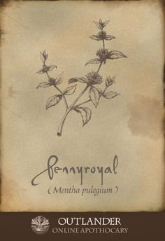 Pennyroyal. An herb used in the 1740s to ease gas and bloating, colds, colic, and indigestion. #Outlander #ApothecaryCabinet