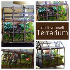 I know how popular these are right now but I absolutly love lil terrariums! ....DIY Terrarium from www.thenovicechefblog.com