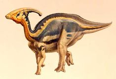 Parasaurolophus -A herbivore from the Late Cretaceous Era (76-73 Million years ago). The Parasaurolophus is from the hadrosaurid family which is a very unique family of dinosaurs. Typically the dinosaurs from this group had strange shaped heads. The Parasaurolophus proves no different because it had a cranial crest which looked like a long curved tube projecting upwards and back from the skull. This could've been used for recognition of each other, loud unique sounds, and thermoregulation.