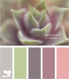 Abby posted this as a color palette for her bridesmaid dresses but I thought it was interesting if you decide to do any centerpieces/decorating with succulents...