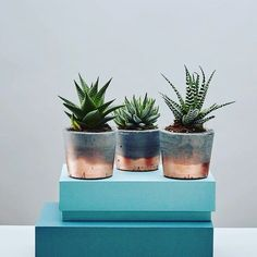 NEW in on ohwhatsthis.com these copper dipped concrete haworthia planters by Geo Fleur #ohwhatsthis #copper #planter #cactus #haworthia #gift #home #homedecor #instalove #interiors #instadaily #bankholiday #easterweekend #treat by o.w.t