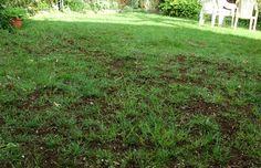 regarnir sa pelouse pour un beau gazon