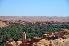 An oasis in the Moroccan desert