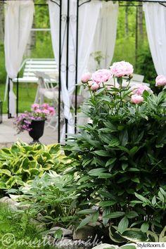 paviljonki,piha,kukat,kukkia,pionit,pihan istutukset,pihakahvit,pihakalusteet,puutarha,puutarhatuoli,puutarhajuhlat,istutukset