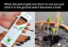 ECO PENCILS. Once they are too short just put them in the ground and they grow into a tree!