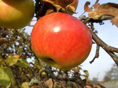 Három almás mese | mesék almáról - Játsszunk együtt! Apple Tree, Projects For Kids, Wallpapers, Autumn, Make It Yourself, Fruit, Kids Service Projects, Fall Season, Wallpaper