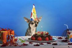 #dog #happy #birthday #cakes #dogs #animals