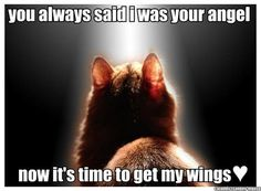 This applies to any of your darling pets - waiting for you at Rainbow Bridge Crazy Cat Lady, Crazy Cats, She Wolf, Life Quotes Love, Highly Sensitive, Sensitive People, Pet Loss, Pet Memorials, In Loving Memory