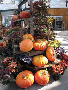 garden nursery autumn pumpkins weathered wood display