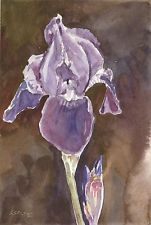Iris ORIGINAL WATERCOLOR PINTURE Flower Purple Plant Steve Greaves Botanical