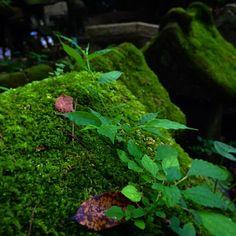 #鎌倉#佐助稲荷神社#苔生し#green