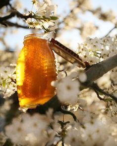 I love honey Pure Honey, Milk And Honey, Golden Honey, Home Made Wax, Million Flowers, Buzz Bee, Bee Do, Wax Hair Removal, Save The Bees